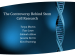 The Controversy Behind Stem Cell Research