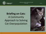 A Community Approach to Solving Cat