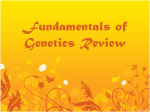 Fundamentals of Genetics Review
