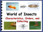 World of Insects - Biology Junction