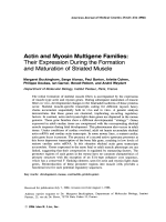 Actin and myosin multigene families. Their expression during the formation and maturation of striated muscle