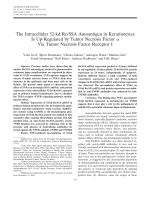 The intracellular 52-kd RoSSA autoantigen in keratinocytes is up-regulated by tumor necrosis factor ╨Ю┬▒ via tumor necrosis factor receptor I.