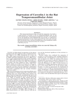 Expression of caveolin-1 in the rat temporomandibular joint.