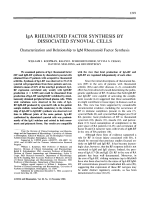IgA rheumatoid factor synthesis by dissociated synovial cells. Characterization and relationship to IgM rheumatoid factor synthesis