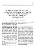 Identification of neutral proteases in human neutrophil granules that degrade articular cartilage proteoglycan.