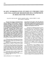 In Situ Hybridization Studies of Stromelysin and Collagenase Messenger RNA Expression in Rheumatoid Synovium.