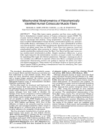 Mitochondrial morphometrics of histochemically identified human extraocular muscle fibers.
