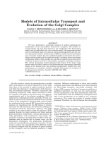 Models of intracellular transport and evolution of the Golgi complex.